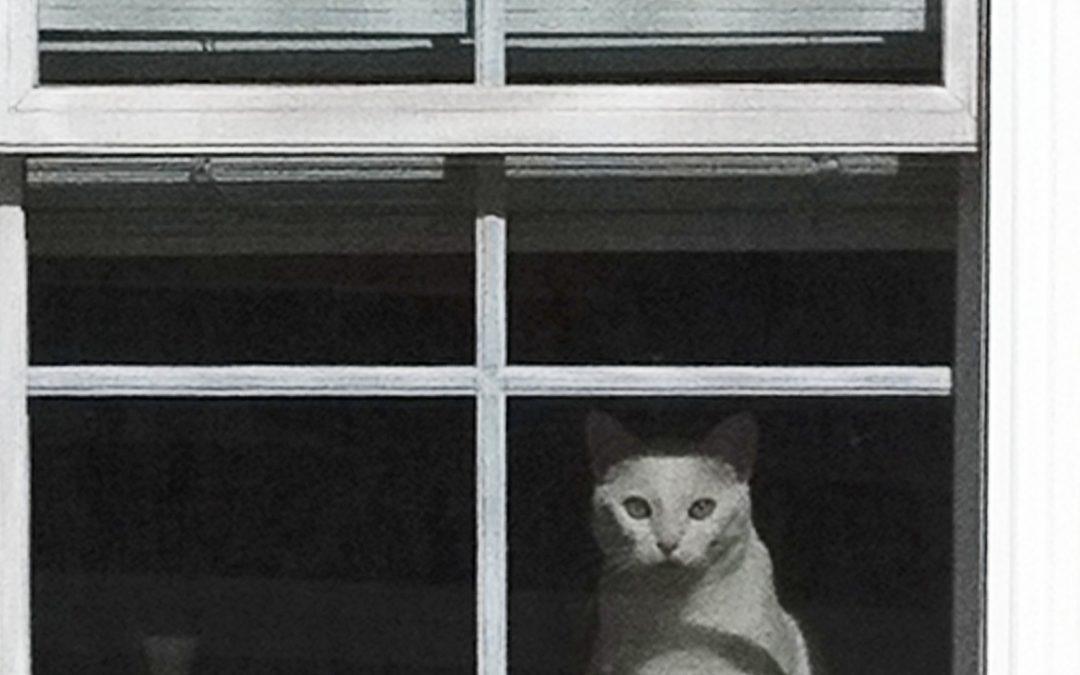 George Knake ~ Cat In a Window