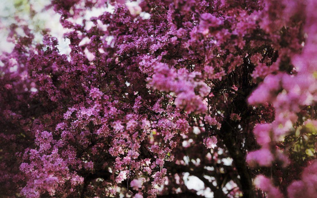 Adam Mead ~ Floral bloom