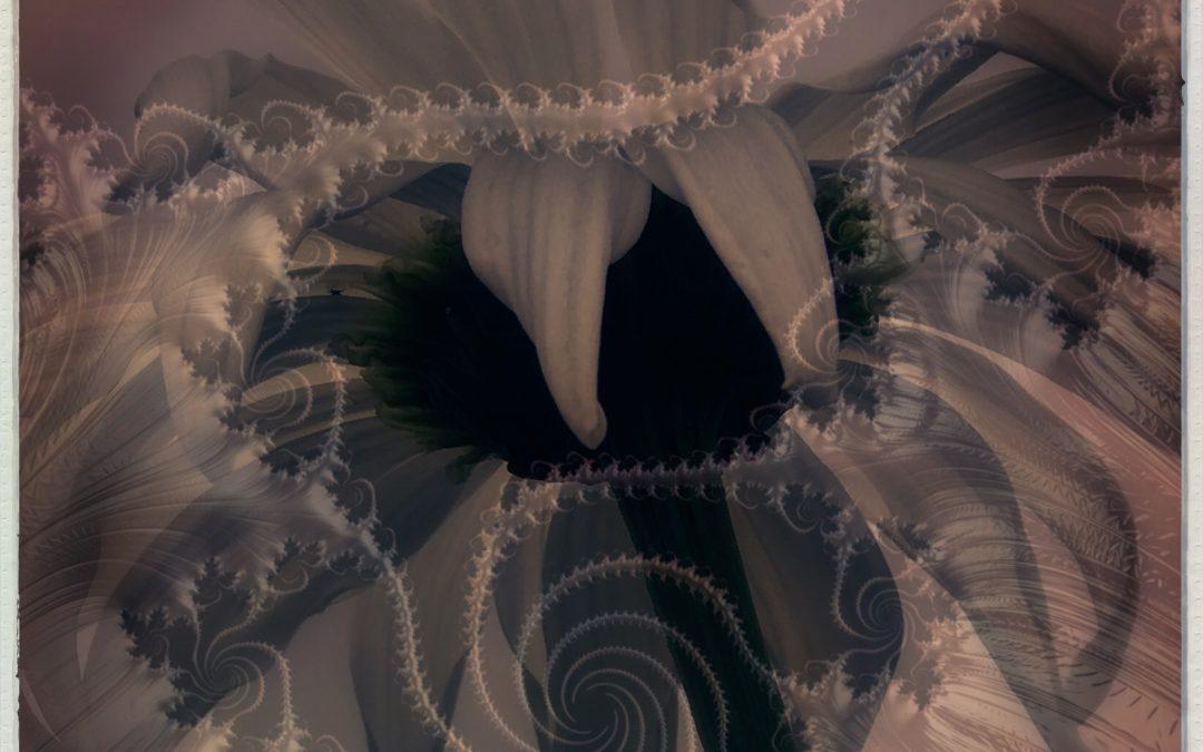 Kate Zari Roberts ~ Flower|Fractal