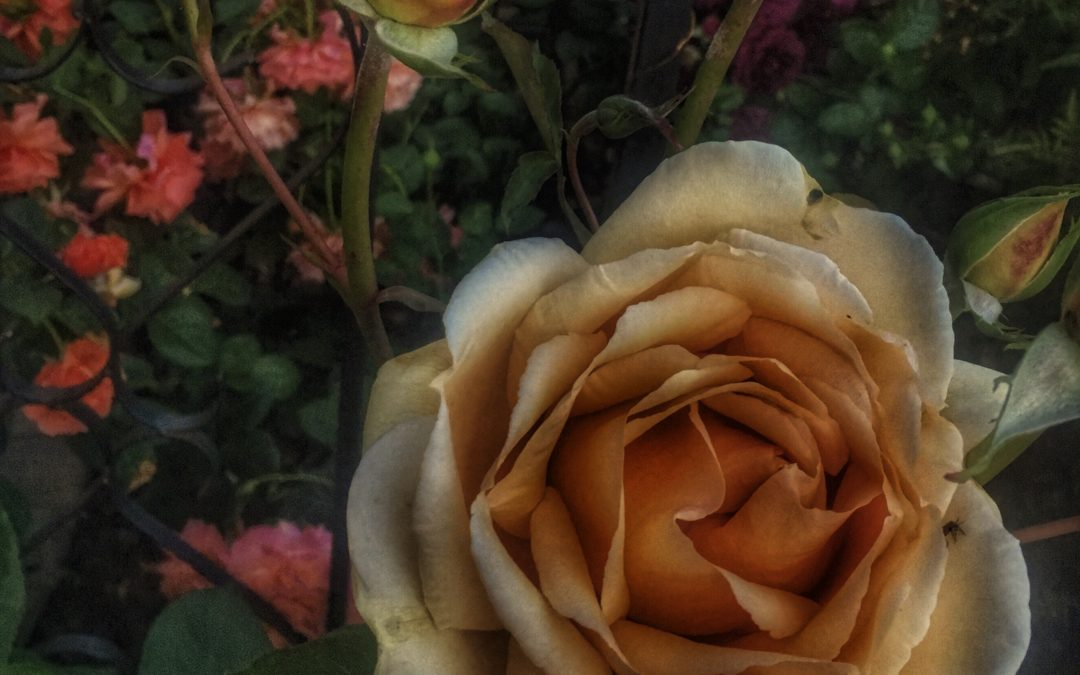 Knox Bronson ~ Flowers, Women, It's All Venus.