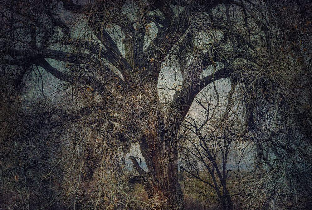 Kate Zari Roberts ~ Gallery 4