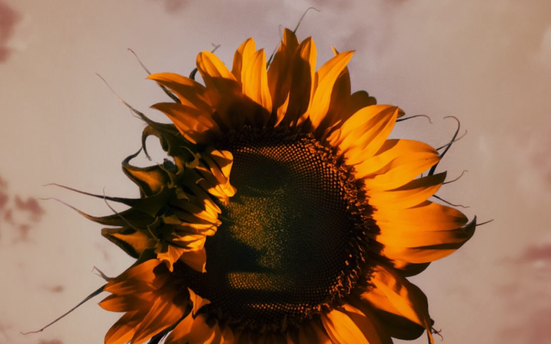 Meri Walker ~ Autumn's Closing In.