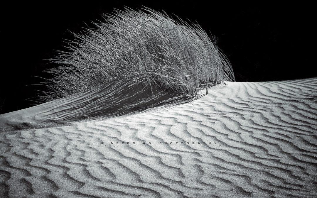 Leon Williams ~ Dune grass