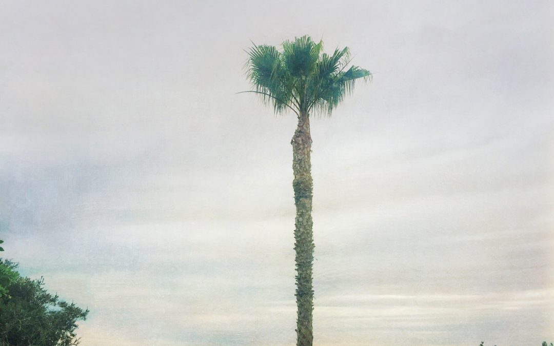 Barbara duBois ~ Palm