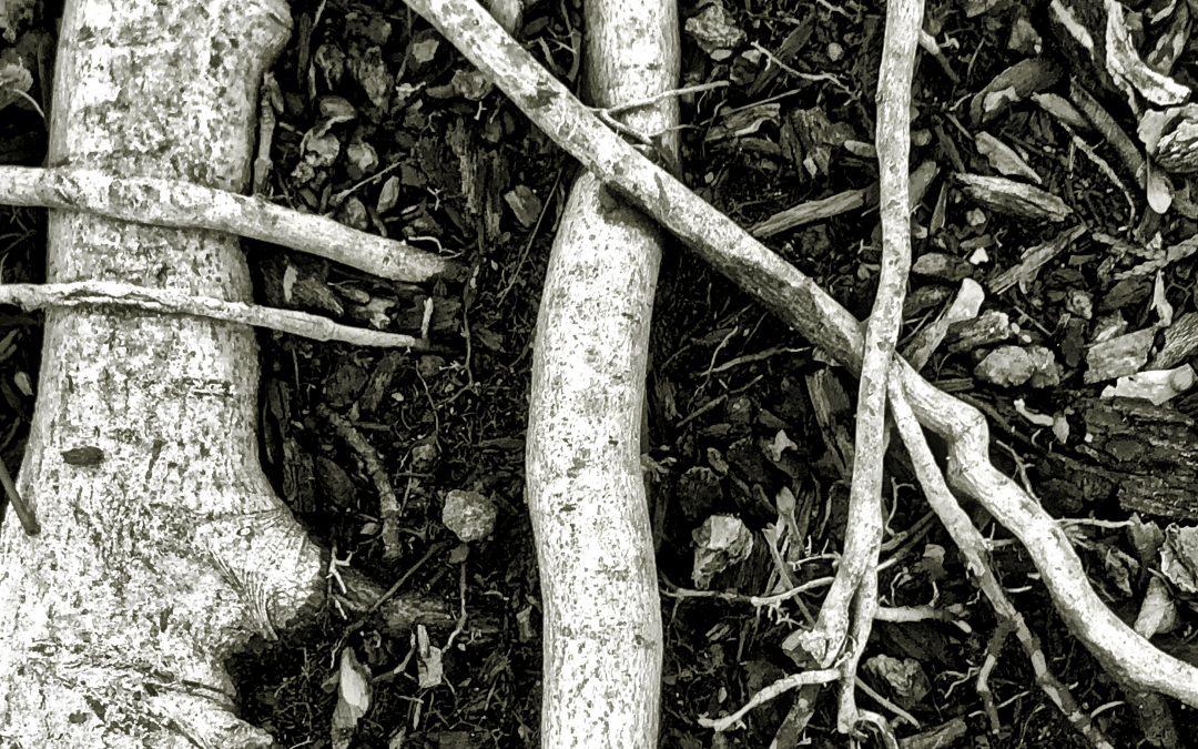 Meri Walker ~ 2020: Exposed Roots