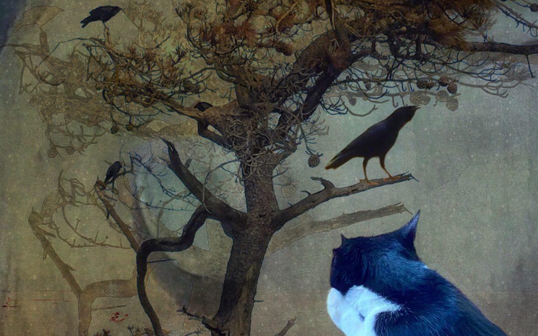Barbara duBois ~ One Woman's Opinion of Monkey Blue