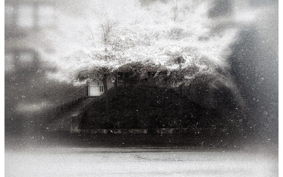 Adam Mead ~ Her blinding white