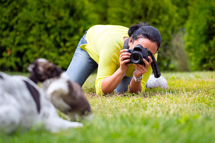 dog pet photography