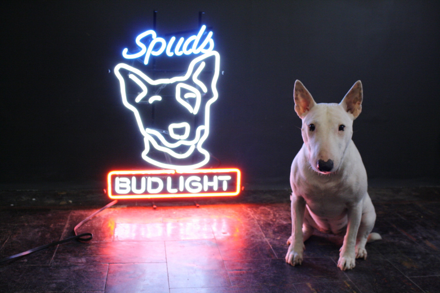 original spuds mackenzie bud light neon bar sign apartment therapy