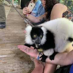 Zoological Wildlife Foundation