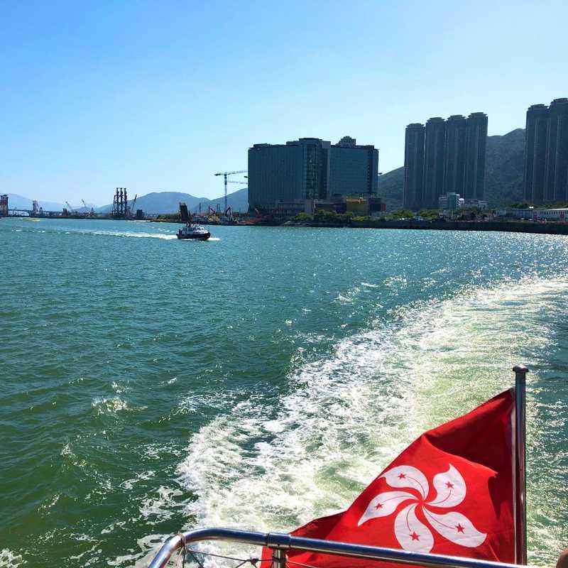 HK Dolphin Watch