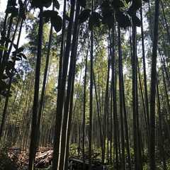 Arashiyama Bamboo Grove / 嵯峨野 竹林の道
