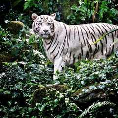 Singapore Zoo - Photos by Real Travelers, Ratings, and Other Practical Information