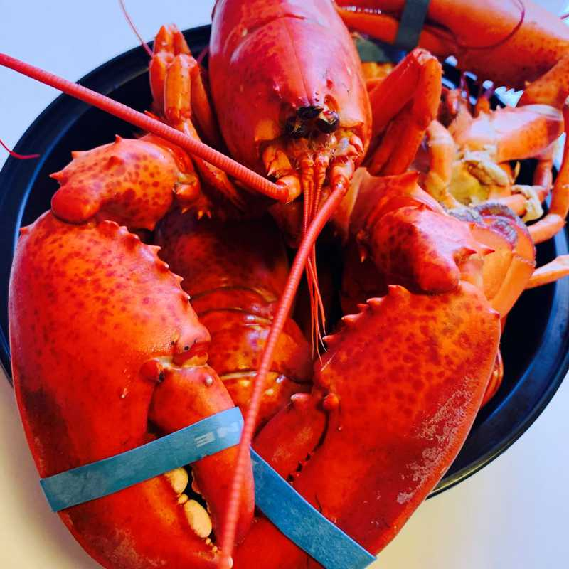 Lobster 🦞 Roe Feast