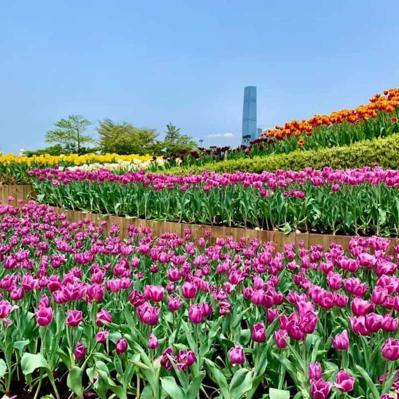 HONG KONG ❤️FLOWERS SHOW❤️ | 2 days trip itinerary, map & gallery