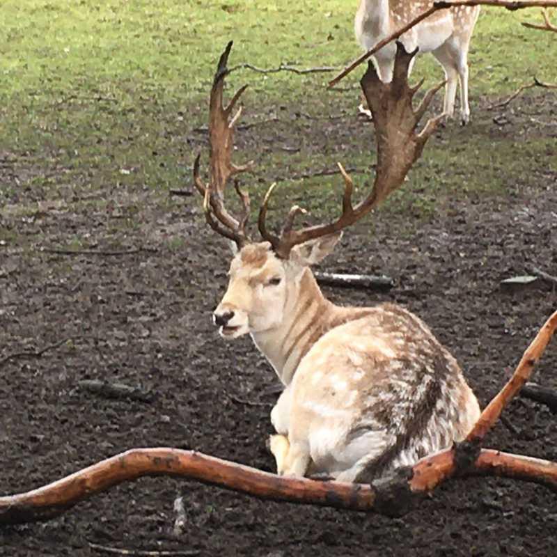 Park Rams Woerthe