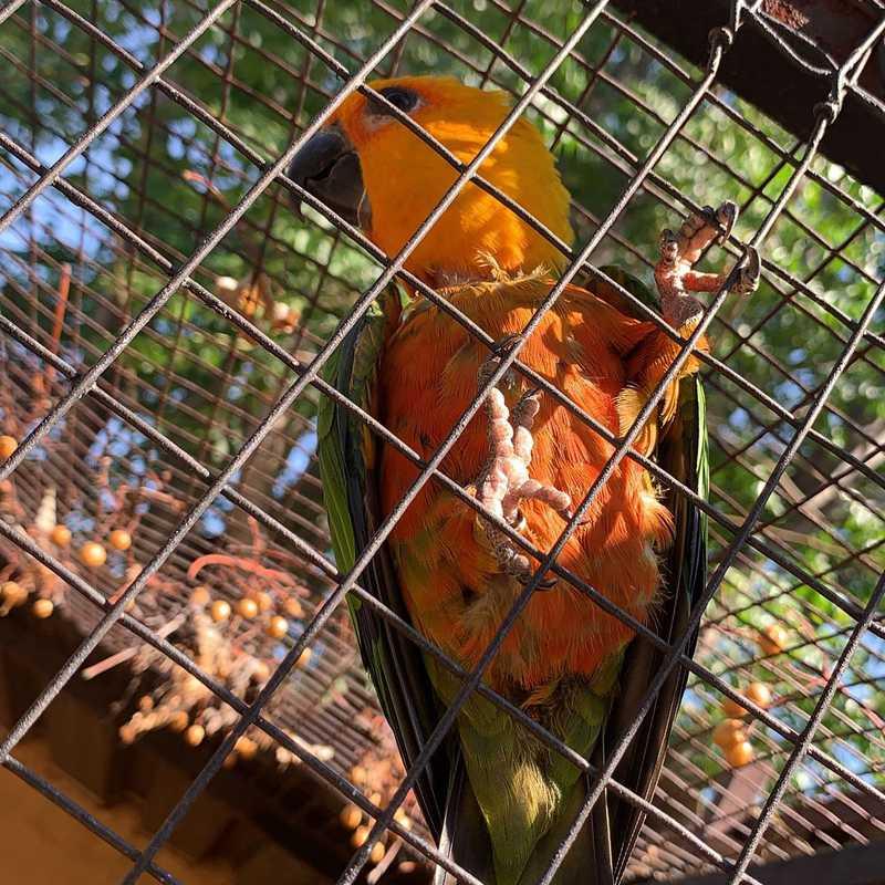 Makalani Bird Park