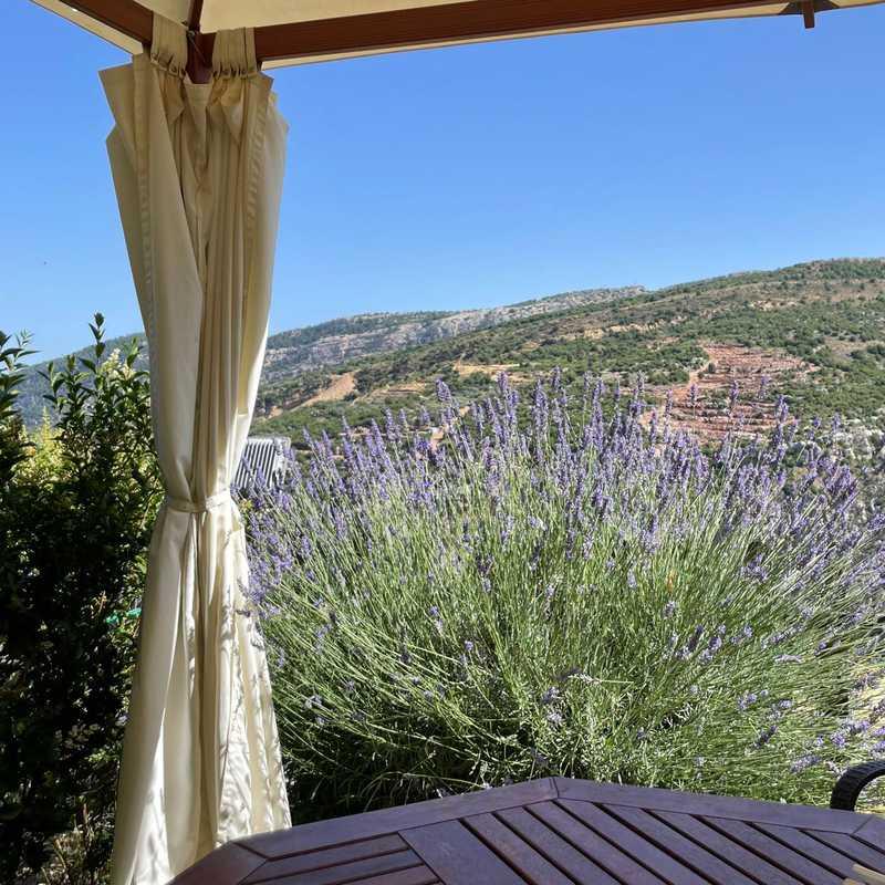 Mountain view tannourine