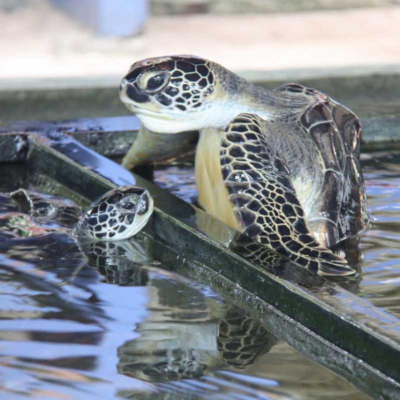 Sea Turtle Hatchery & Rescue Center