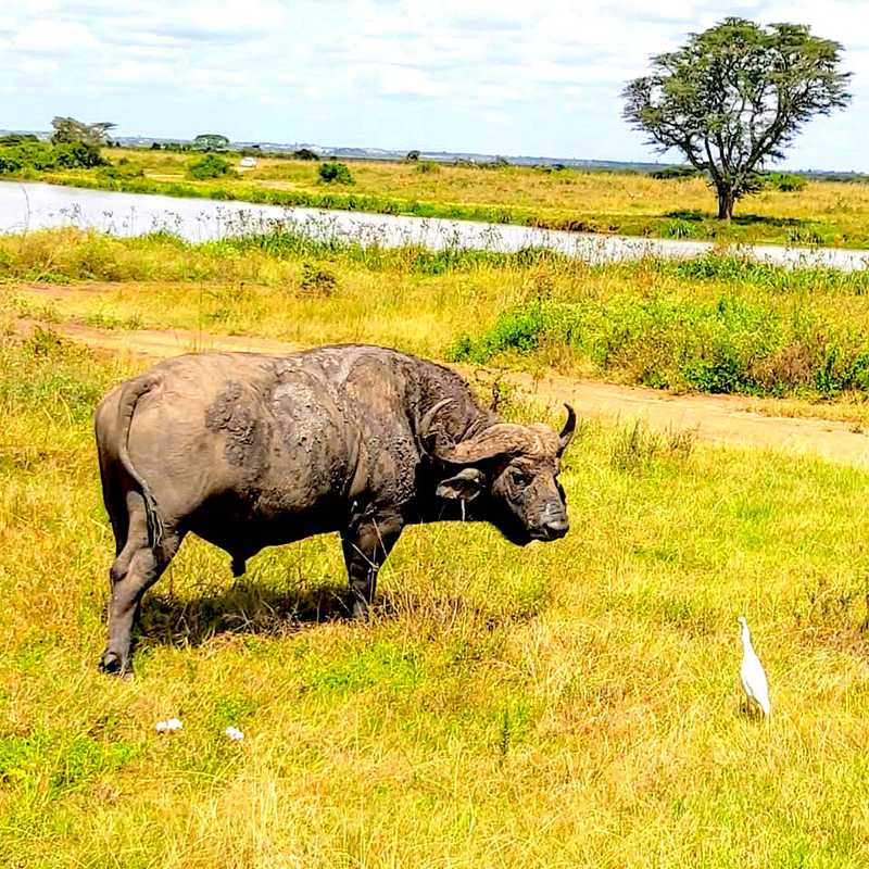 Trip Blog Post by @MissBee: Nairobi National Park #2 🏞 | 1 day in Jun (itinerary, map & gallery)