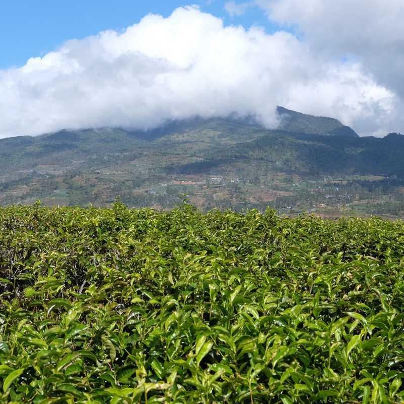 Malino highlands