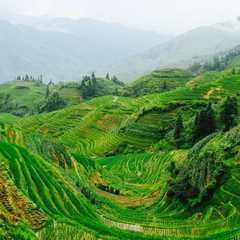 China - Selected Hoptale Trips