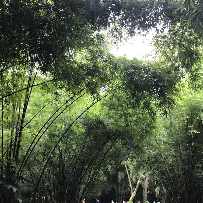 Chengdu Giant Panda Research Base