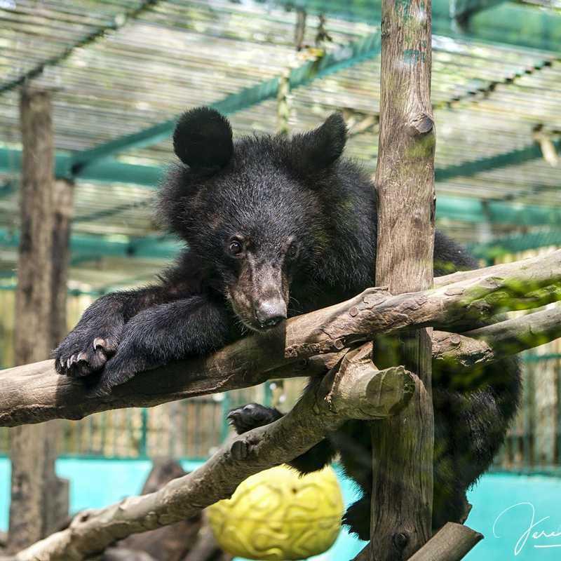 Tat Kuang Si Bear Rescue Centre