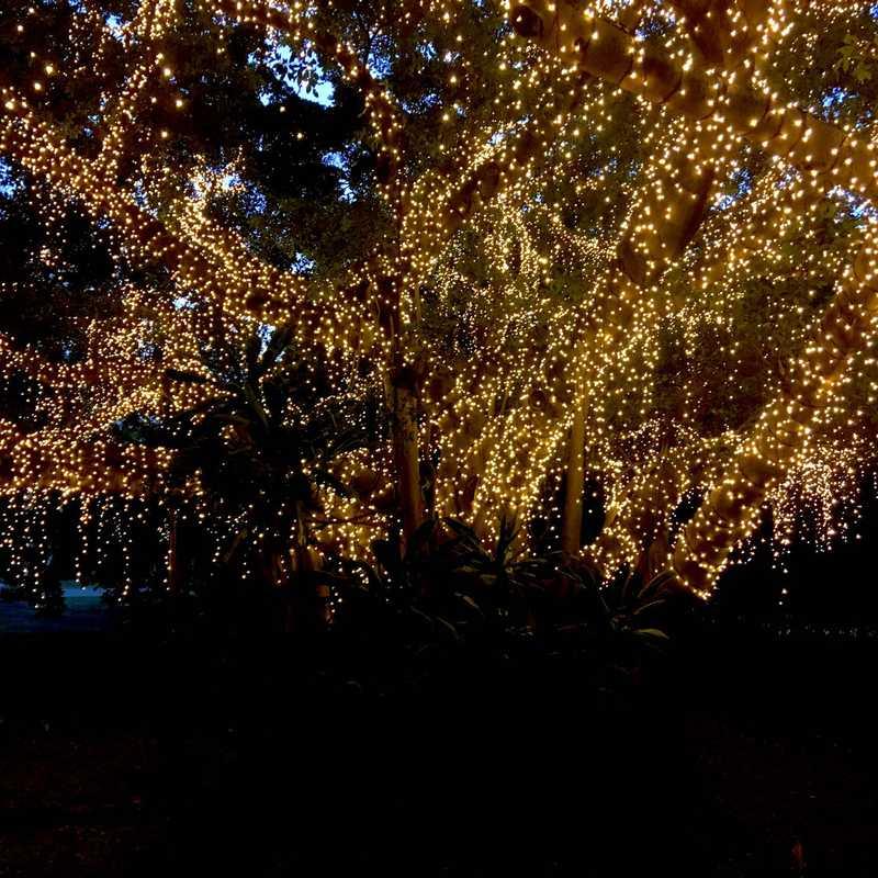 Fairy Trees Brisbane