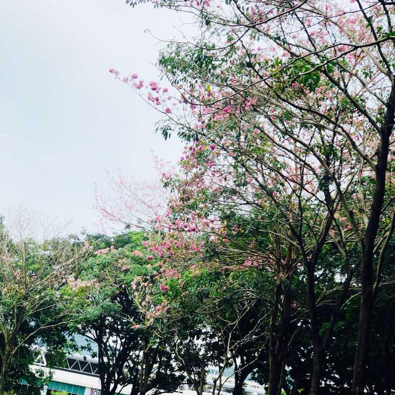 Penang, 🇲🇾Malaysia 2021 | 4 days trip itinerary, map & gallery