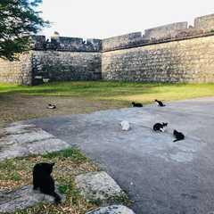 Fort of Santa Catarina - Real Photos by Real Travelers