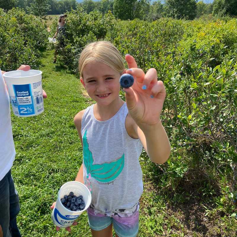 Blueberry Meadows