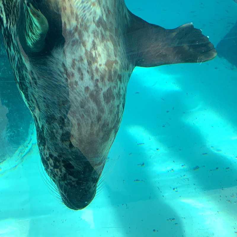 Virginia Aquarium & Marine Science Center