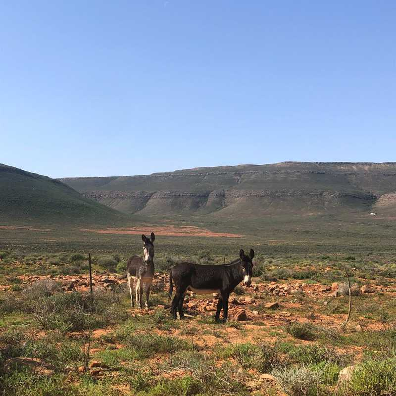 Matjiesfontein padstal