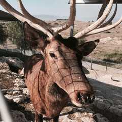 Melios Zoo   POPULAR Trips, Photos, Ratings & Practical Information