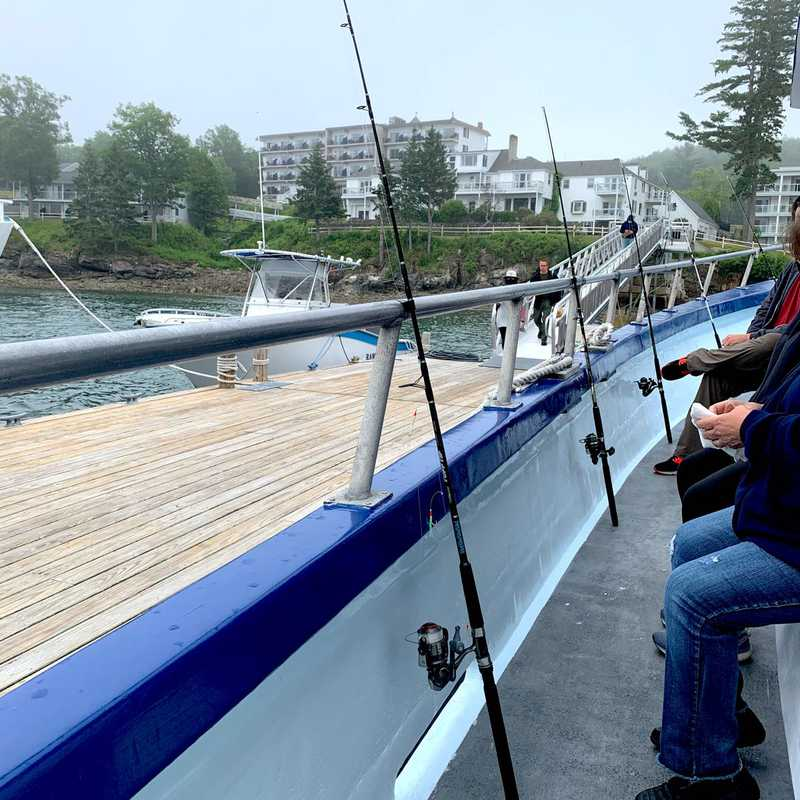 Acadian Boat Tours