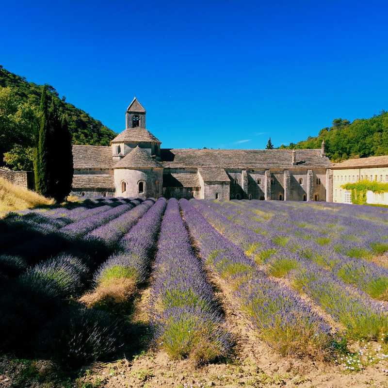 Provence In Lavender Season | 7 days trip itinerary, map & gallery