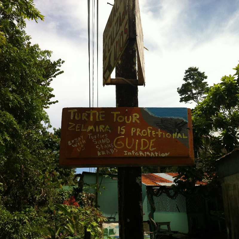 Self guided turtle tour