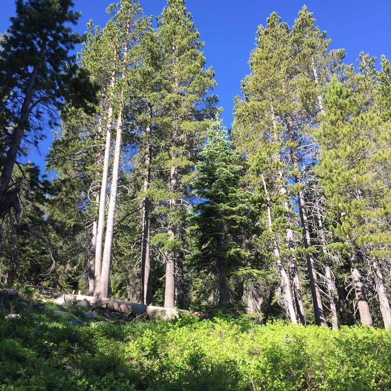 Emigrant Lake Trail, Tuolomne Wilderness