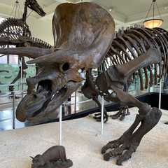 American Museum of Natural History | POPULAR Trips, Photos, Ratings & Practical Information