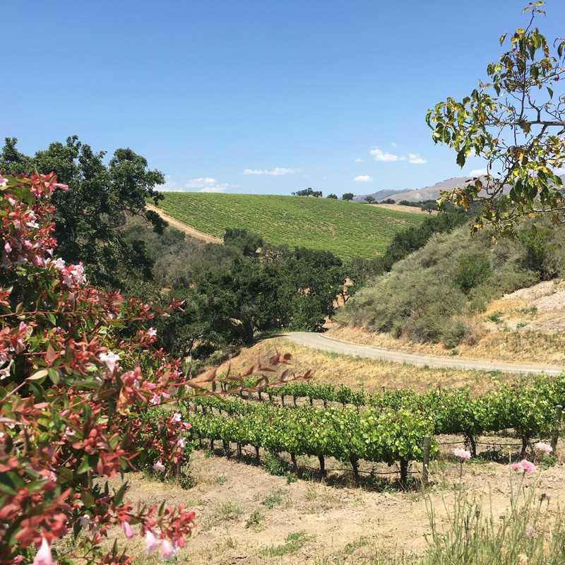 Demetria Winery & Vineyard