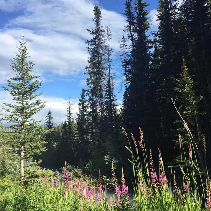 Trip Blog Post by @KittyTreks: Canadian Rocky Mtns 🇨🇦 | 9 days in Jul/Aug (itinerary, map & gallery)
