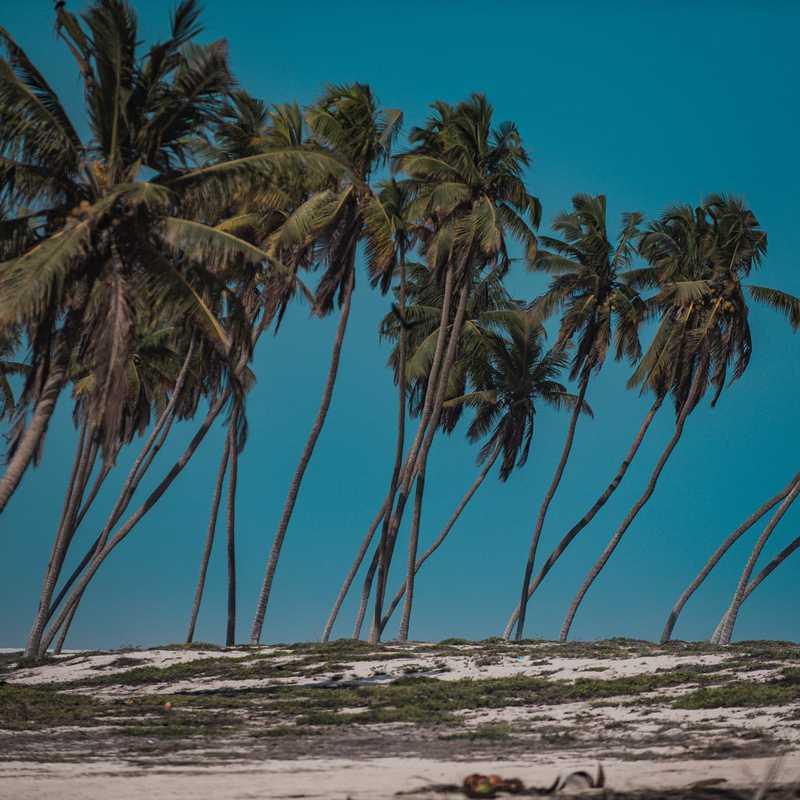 Trip Blog Post by @RoyMrad: SALALAH 🌴 🇴🇲 | 4 days in Jun (itinerary, map & gallery)