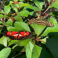 Butterfly World | POPULAR Trips, Photos, Ratings & Practical Information