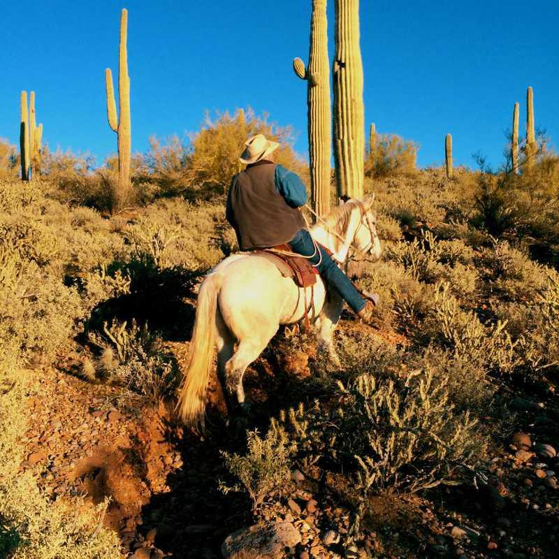 Saguaro Lake Horseback Ride