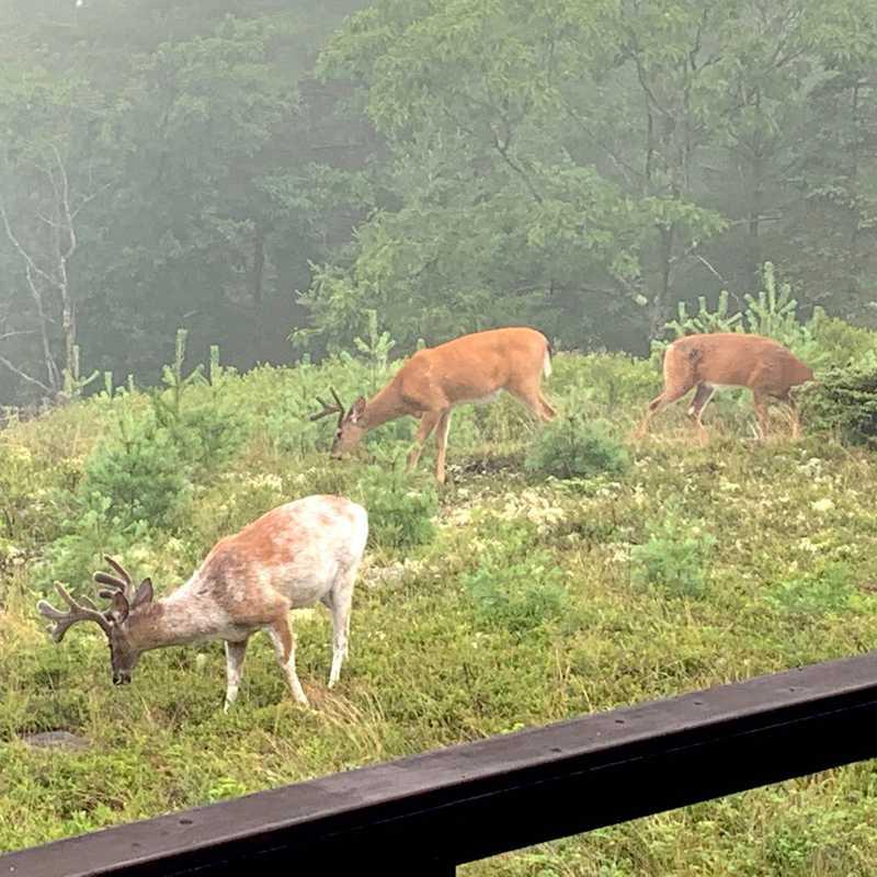 Visiting Deers
