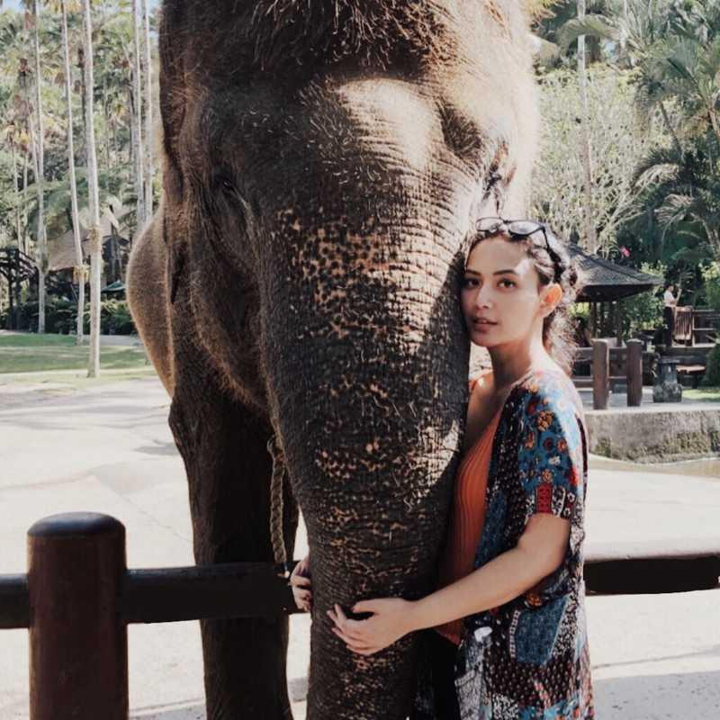 Mason Elephant Park & Lodge (Elephant Safari Park & Lodge)