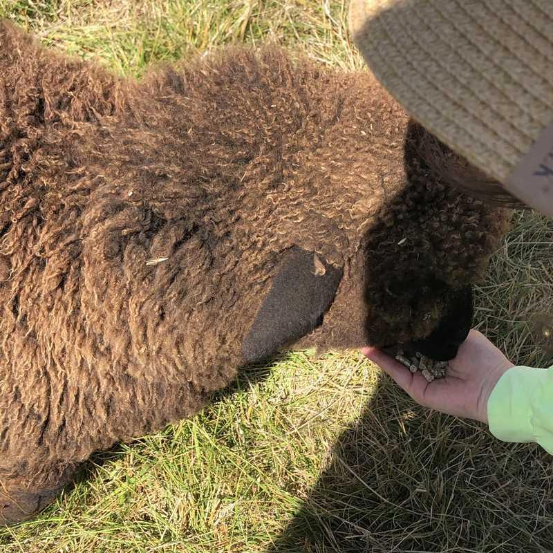 Gem Alpaca Stud