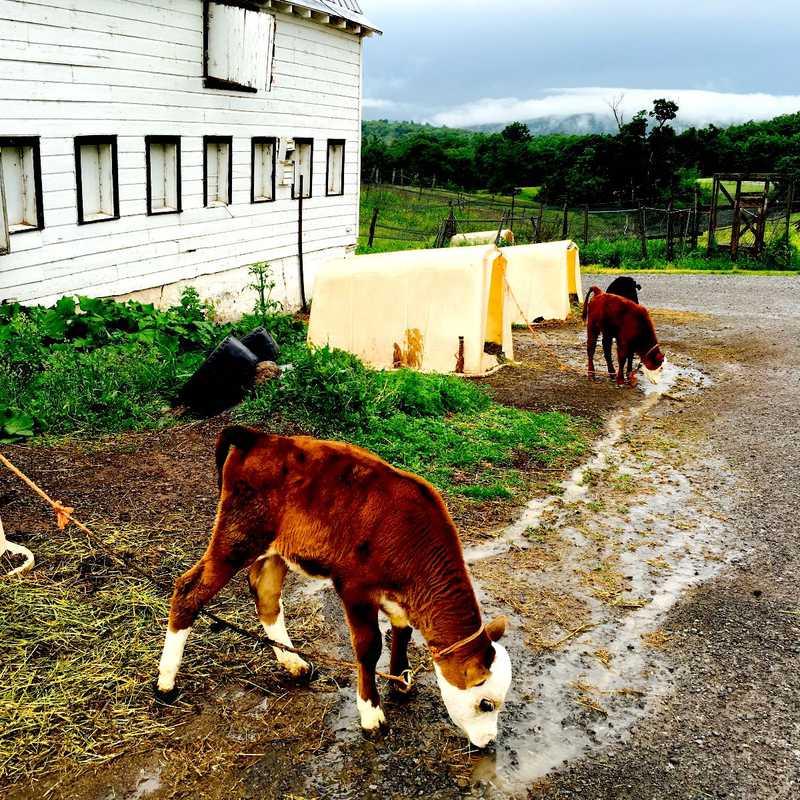 Hull-O Farms
