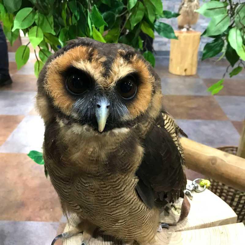 Owlpark ikebukuro